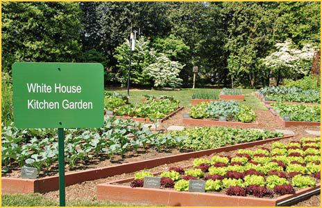 White-House-Kitchen-Garden-1